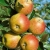 Amazon.de Pflanzenservice Starter Set Obstbäume: je 1 Apfelbaum