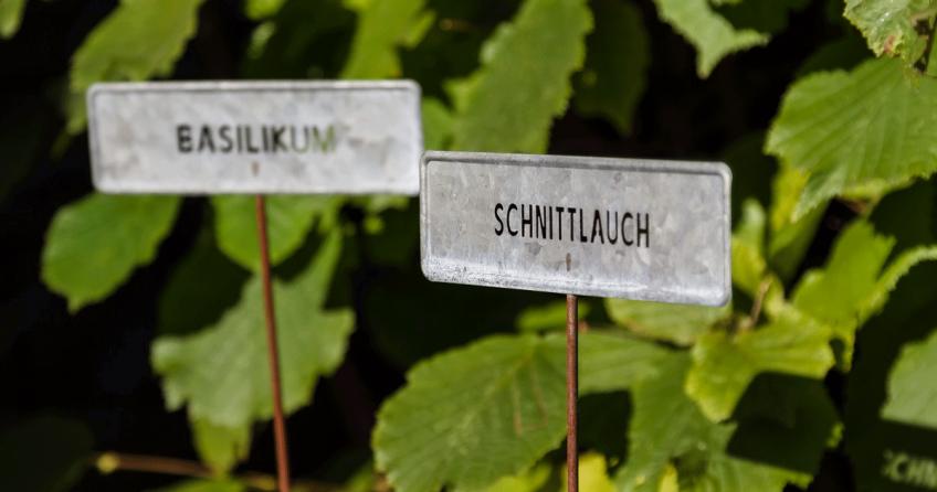 Der Kraeutergarten