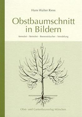 Obstbaumschnitt in Bildern -