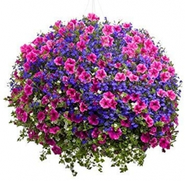 100pcs hängende Petunien Samen Melisse ursprünglichen Blumensamen mehrjährigen Blumen für Hausgarten Bonsai Topf pflanzen Petunie 5 - 1