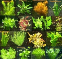 150 Wasserpflanzen XXL Set, Dünger, Aufbereiter - 1
