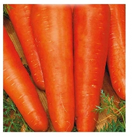 4500 aprox - Karotten Samen San Valerio - Daucus Karotte In Originalverpackung Made in Italy - Karotten - 1