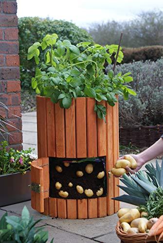 Brunnen und Mehr Qualitativ hochwertiger Kartoffelpflanzer aus Holz - 5