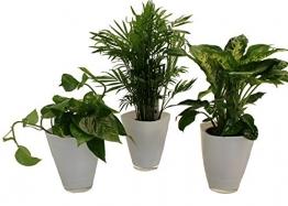 Dominik Blumen und Pflanzen, Tropic-Trio, Efeutute Zimmerpalme mit Dieffenbachia und Dekotopf, weiß - 1