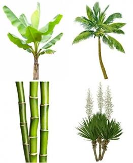Freiland Mix - extremst frosthart - 11 Arten je 10 Samen - Palmen - Bananen - Bambus ... - 1