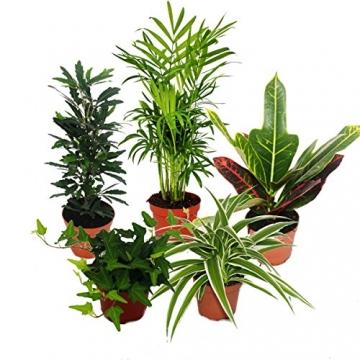 Großes Zimmerpflanzen Set mit 5 Pflanzen - 9cm - 1