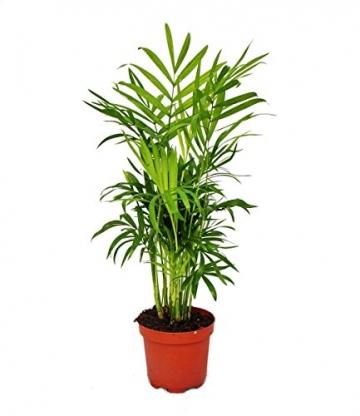 Großes Zimmerpflanzen Set mit 5 Pflanzen - 9cm - 2