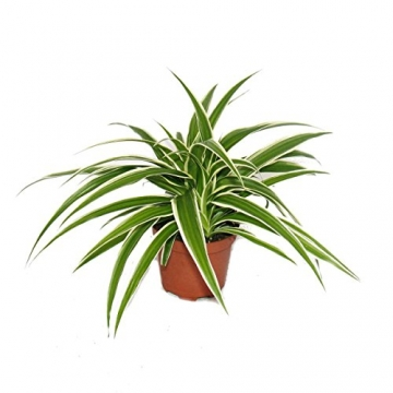 Großes Zimmerpflanzen Set mit 5 Pflanzen - 9cm - 4