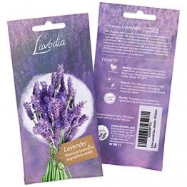 LAVODIA Lavendel Samen mehrjährig winterhart Premium Saatgut für ca. 100 Lavendel Pflanzen (250 Lavendelsamen) - 1