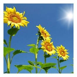 Riesen-Sonnenblume - bis 4 Meter - Wolkenkratzer - Sky Scraper - 20 Samen - 1