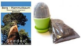 Seedeo® Anzuchtset Berg - Mammutbaum (Sequoiadendron giganteum) 50 Samen - 1