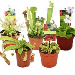 Starter Set Fleischfressende Pflanzen - 5 Pflanzen - 1