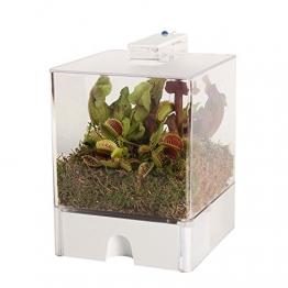 Swampworld Terrarium - 2-farbige Beleuchtung - 3 Fleischfressende Pflanzen - 1