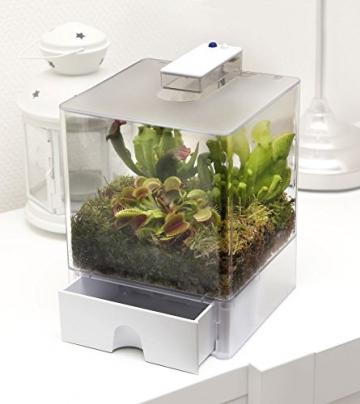 Swampworld Terrarium - 2-farbige Beleuchtung - 3 Fleischfressende Pflanzen - 2