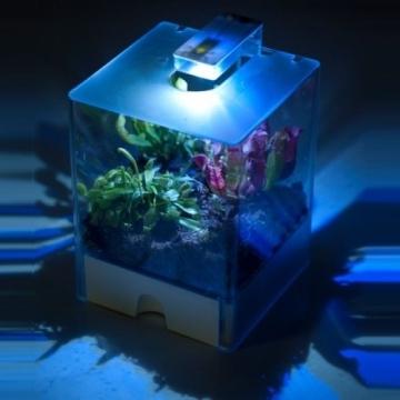Swampworld Terrarium - 2-farbige Beleuchtung - 3 Fleischfressende Pflanzen - 4