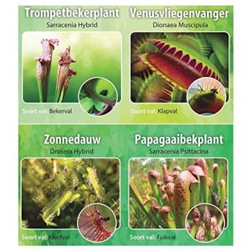 Swampworld Terrarium - 2-farbige Beleuchtung - 3 Fleischfressende Pflanzen - 6
